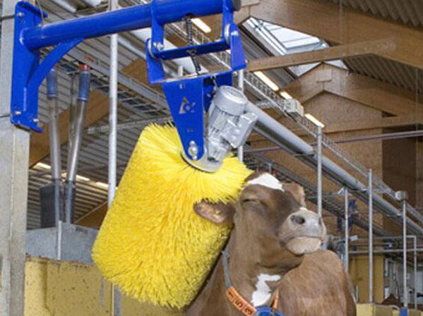 cow cattle brush